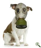 環境汚染と愛犬と