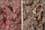 生食系ドッグフードの特徴